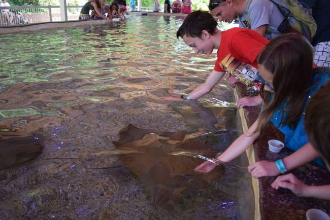 Fun Staycation Ideas for Any Family - Find local attractions for the whole family
