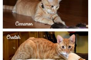 Provide an Forever Home thru Pet Adoption