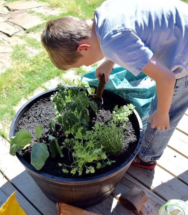 Create a Container Pizza Garden - We'll show you how easy it is to create and grow what you need for family pizza night