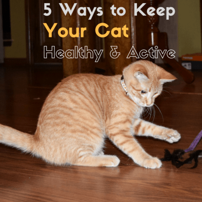5 Ways to Keep Your Cat Healthy and Active
