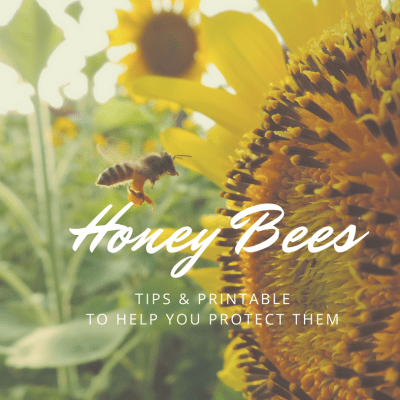 I Spy a Pollinator: Tips for Protecting Honey Bees