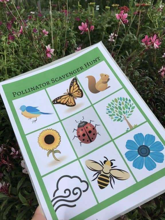Printable Pollinator Scavenger Hunt - Perfect for the backyard, local park, or on a nature walk
