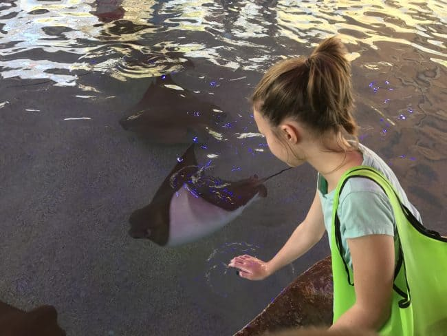 CowNose Stingrays at Stingray Bay - 5 Things Not to Miss at the Oklahoma City Zoo - Here are few fun kid-friendly activities the family will love