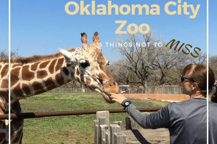 5 Things Not to Miss at the Oklahoma City Zoo
