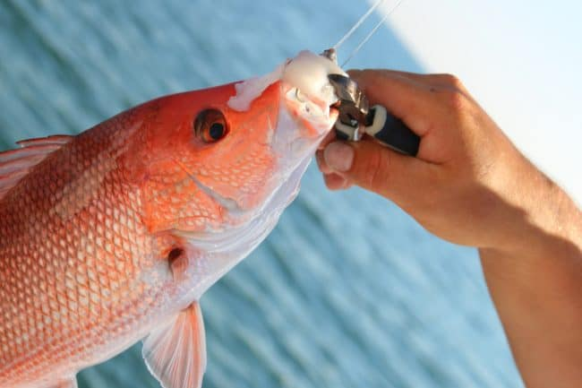 Deep Sea FIshing- Enjoy Gulf Shores and Orange beach Alabama and experience family fun on this 3 Days itinerary filled with Fun Things to Do With Kids