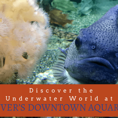 Discover the Underwater World at Denver's Downtown Aquarium