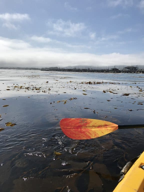 Sea Kayaking is a great way to see the California coast along Monterey and all the sea life in the Monterey Bay Marine Sanctuary