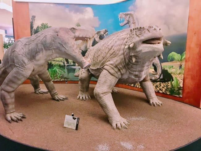 I70 Road Trip - 5 Things to Do in Hays, Kansas with Kids - Permian Monsters exhibit at the Sternburg Museum of Natural History