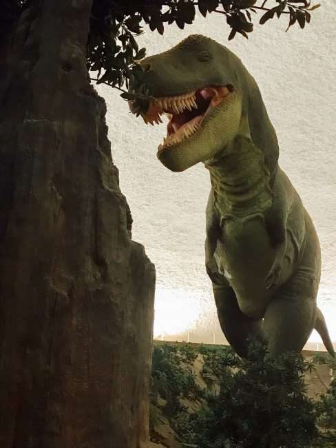 I70 Road Trip - 5 Things to Do in Hays, Kansas with Kids - Check out the animated T Rex and other dinosaurs exhibit at the Sternburg Museum of Natural History