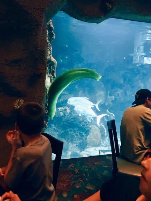 Huge eel inside the Downtown Aquarium restaurant