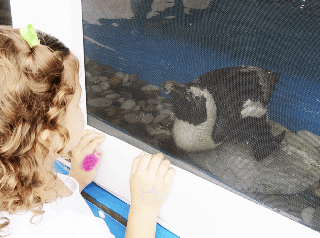 Girl looking at penguin at Gulf World Marine Park